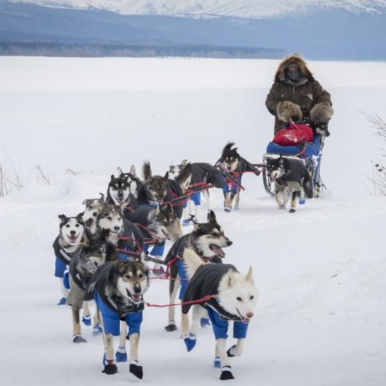 L'Iditarod, l'album