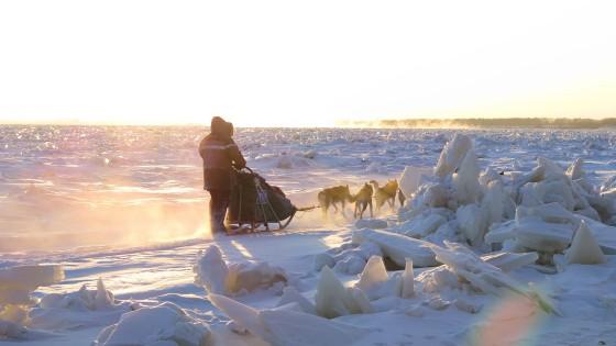 Odyssee-Sauvage-12-Semaine-du-13-janvier-2014-Fleuve-Amour-NVanier-TAIGA