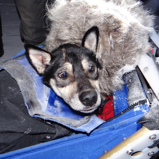 Yukon-Quest-10-Central-17-fevrier-2015-NVanier-TAIGA