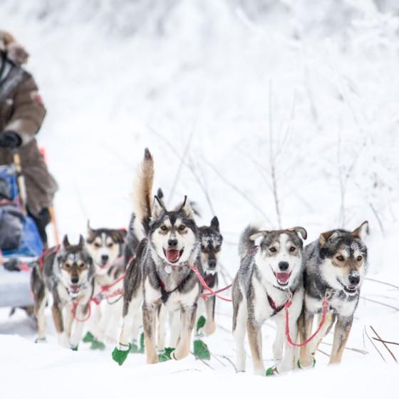 Yukon-Quest-12-depart-Circle-17-fevrier-2015-Julien-Schroeder