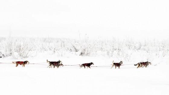 Yukon-Quest-13-depart-Circle-17-fevrier-2015-Julien-Schroeder