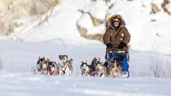 Yukon-Quest-15-etape-Fairbanks-19-fevrier-2015-Julien-Schroeder