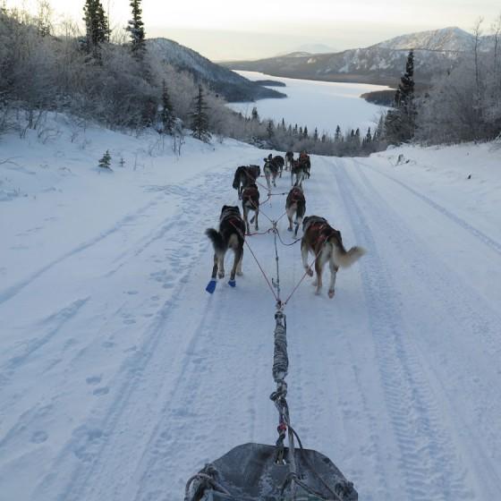 Yukon-Quest-18-Entrainement-2015-NVanier-TAIGA