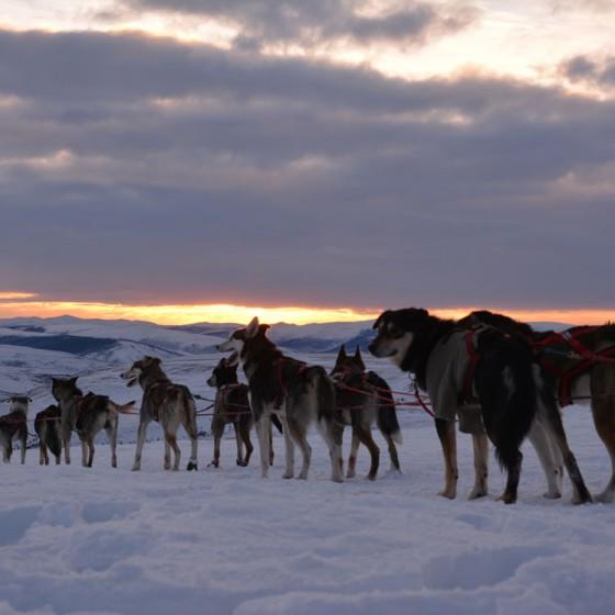 Yukon-Quest-8-Central-17-fevrier-2015-NVanier-TAIGA
