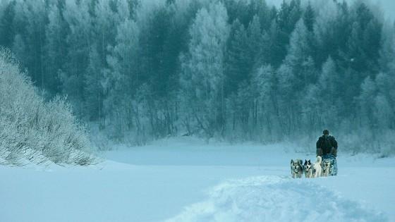 chiens12-Attelage-Odyssee-siberienne-TBranquart