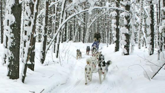 chiens14-Attelage-Odyssee-siberienne-TBranquart