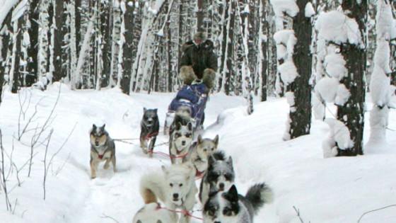 chiens16-Attelage-Odyssee-siberienne-TBranquart