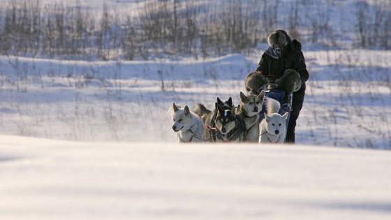 chiens18-Attelage-Odyssee-siberienne-TBranquart