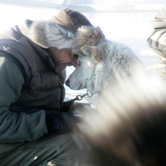 chiens19-Odyssee-siberienne-TMalty