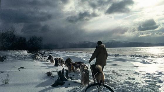 chiens20-Attelage-Passion-du-grand-nord-NVanier