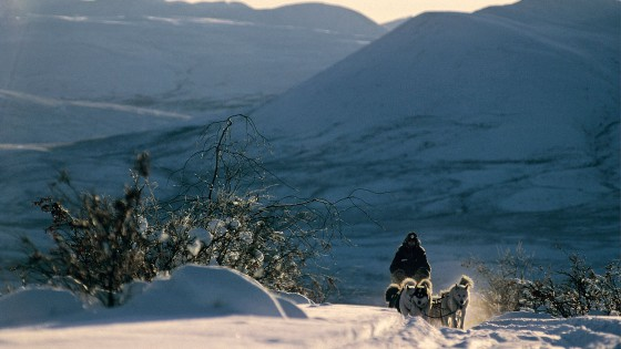 chiens22-Attelage-Passion-du-grand-nord-NVanier
