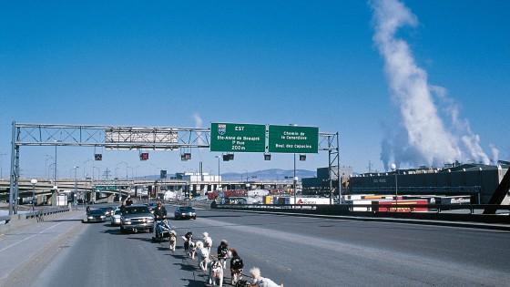 chiens24-Attelage-arrivee-Quebec-PMichaut
