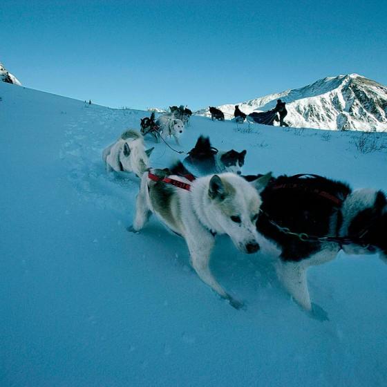chiens25-Odyssee-siberienne-Alvaro-Canovas