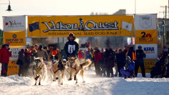 chiens26-Attelage-YukonQuest-Eric-Travers