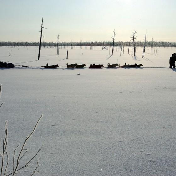 coeur-1-Attelage-Odyssee-siberienne-Philippe-Petit