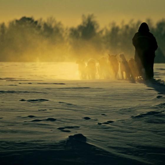 coeur-3-Attelage-Odyssee-siberienne-TBranquart